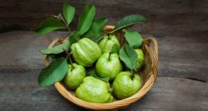 khasiat daun jambu biji