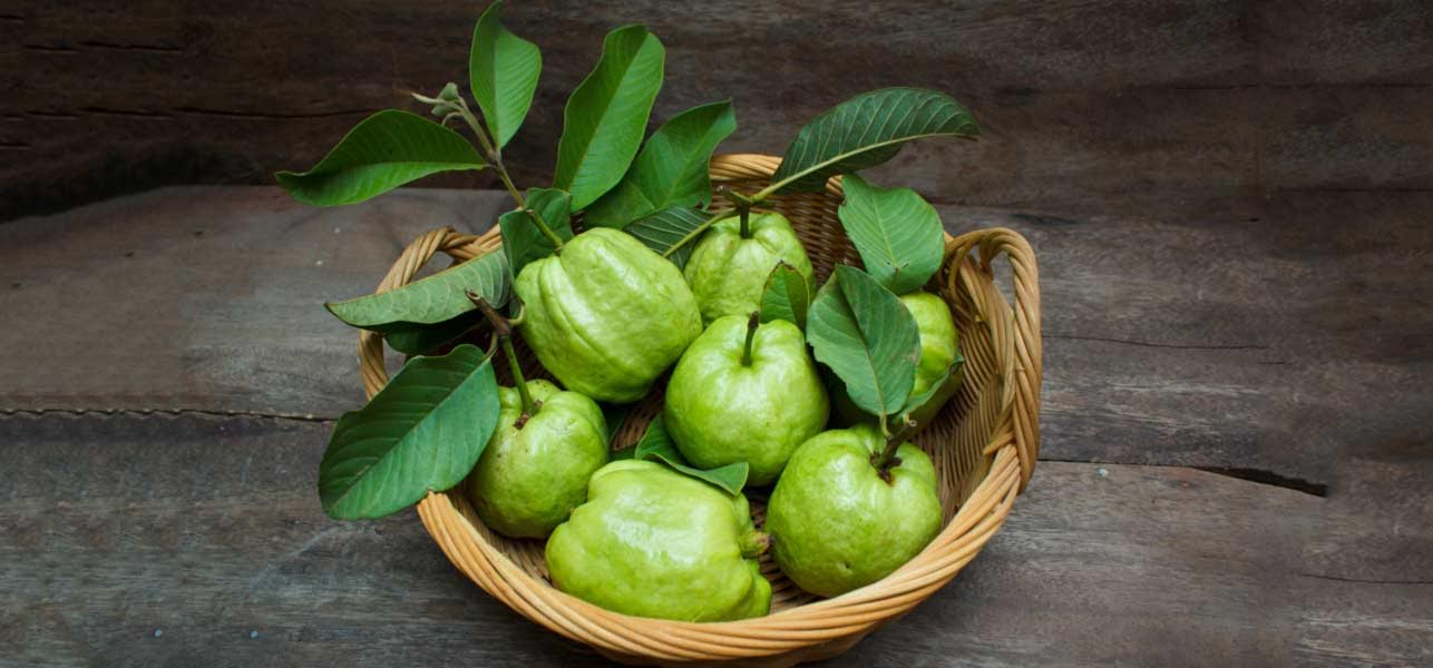 Did You Know Guava Leaves Are Very Good for Facial Beauty?